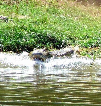 Rubondo Island National Park:                                     Mamba baring his teeth