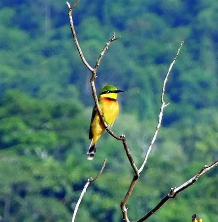 Rubondo Island National Park:                                     Bee Eater