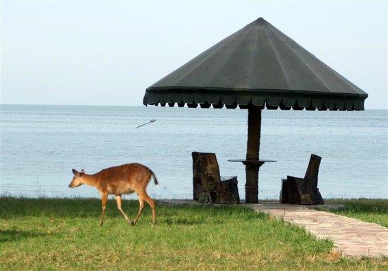Rubondo Island National Park:                                     Part of the scenery