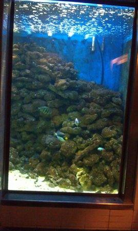Zinc Port Douglas Fish Tank In Toilet