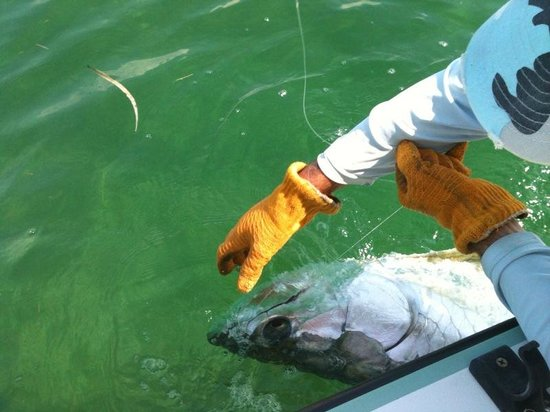 Little Torch Key, Floryda: Tarpon Grab