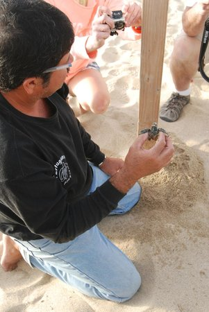 Tortugueros Las Playitas:                   A volunteer with the Sea Turtle Organization