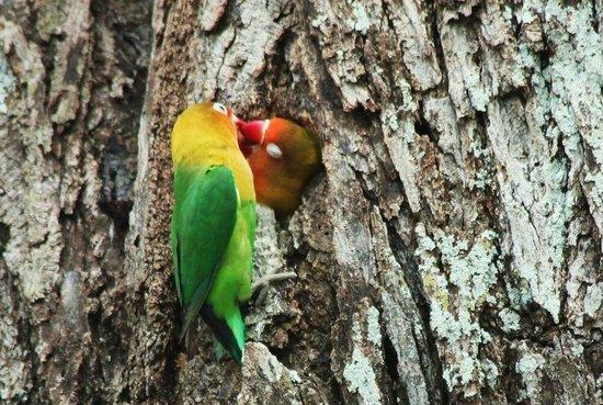 Ndutu Safari Lodge 사진