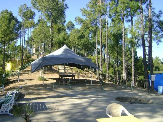 Pine Hills Eco Camp Barog Himachal Pradesh Campground