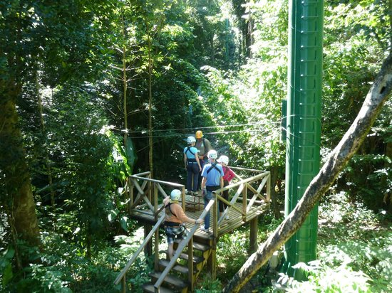 Rainforest Adventures Rainforest Excursion Tour照片