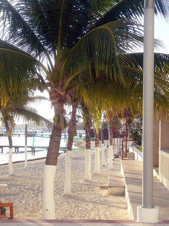 هوليداي إن كانكون أريناس:                   Vista de playa                 