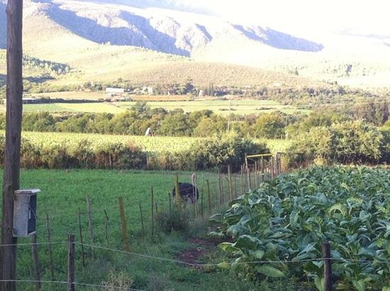 Swartberg Country Manor:                                     love country