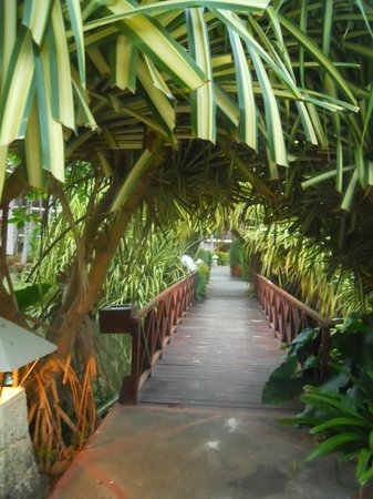 Natura Park Beach - EcoResort & Spa:                                     Bridge over the water