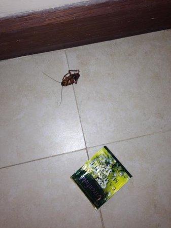 Novela Muine Resort & Spa :                   тараканчик