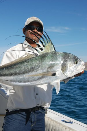 Rooster fish picture of baja anglers cabo san lucas for Rooster fish cabo