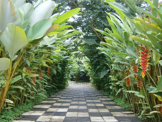Ubud Green:                                                       Garden path from resort's front entrance