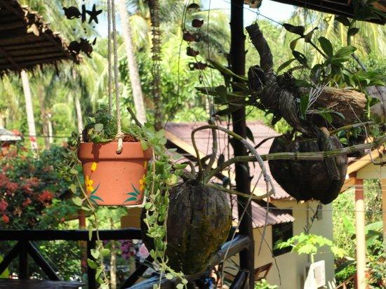 Janinas Resort:                   зелень на веранде