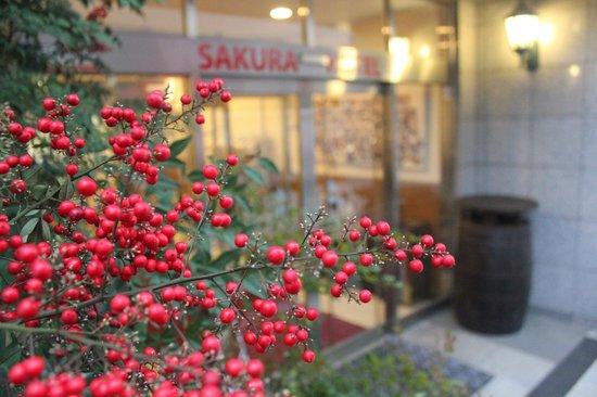 Sakura Hotel Hatagaya :                   Hotel Sakura Hatagaya: Red berries beside the entrance. February 2013