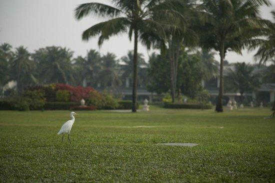 Taj Exotica Goa:                   цапля