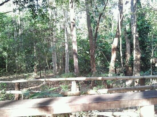 Yaklom Hill Lodge:                                     Natur pur!! einfach schön!