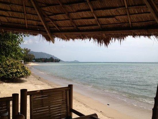 The Blue Parrot Beach Resort:                                     Blue Parrot Beach Bar                                  