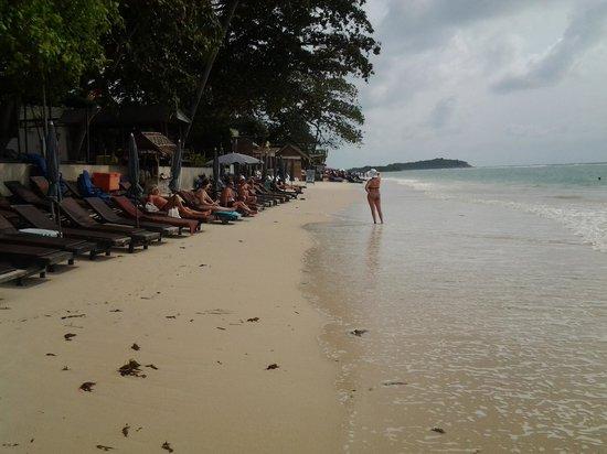 Chaweng Garden Beach Resort:                   beach