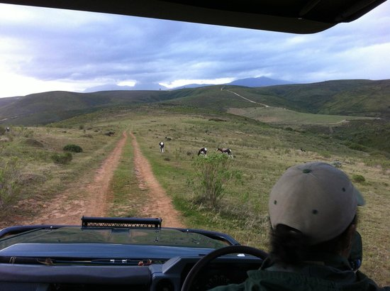 Botlierskop Private Game Reserve:                   Morning Safari