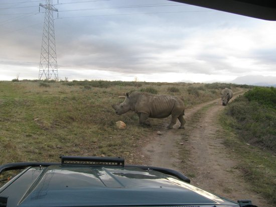 Botlierskop Private Game Reserve:                   (morning safari drive)