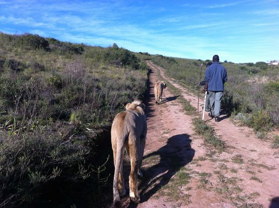 Botlierskop Private Game Reserve :                   (neighbouring farm/reserve)
