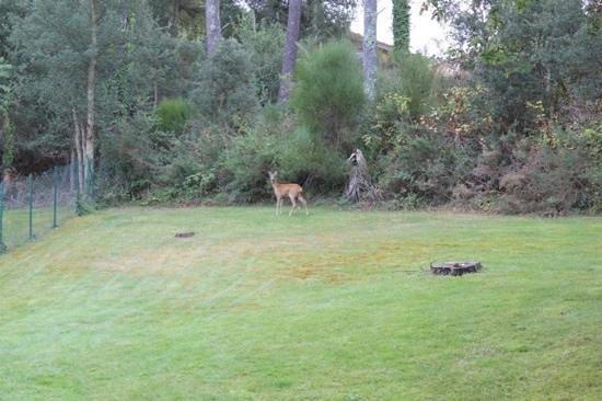 Madame Vacances Villas Club Royal Aquitaine :                   local wildlife