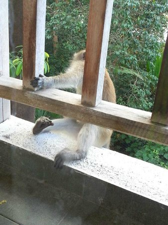 The Andaman, A Luxury Collection Resort:                   monkey