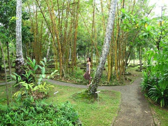 Dalmanuta Gardens - Ayurvedic Resort & Restaurant:                   Strolling through the herbal garden