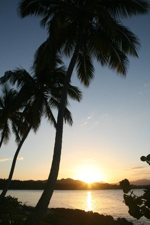 Grand Paradise Samana:                   Palm trees