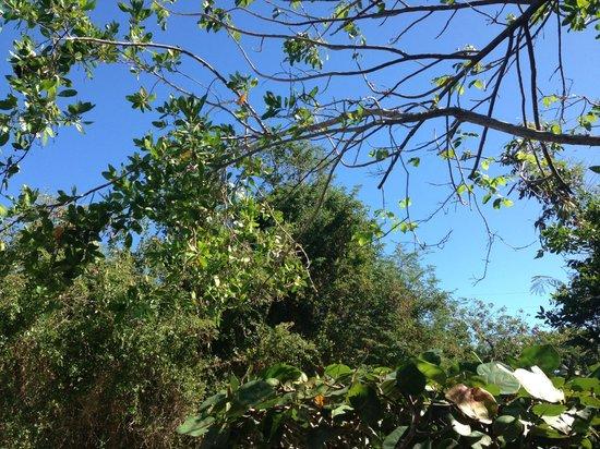 Las Cabezas de San Juan Nature Reserve照片