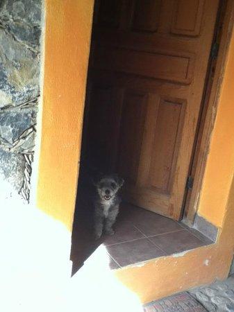 Refugio Romano:                   juno contenta!