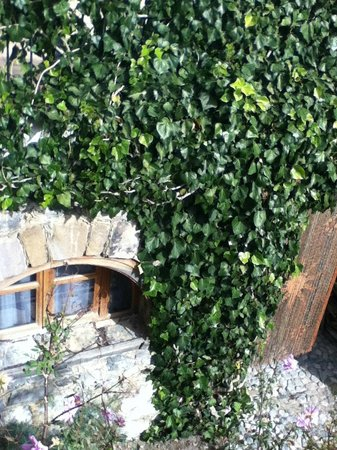 Refugio Romano:                   hermosas enredaderas