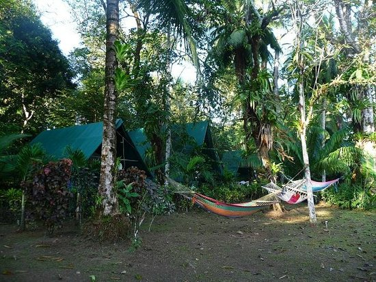 Corcovado Adventures Tent Camp:                   Corcovado Adventures Camp tents and hammocks