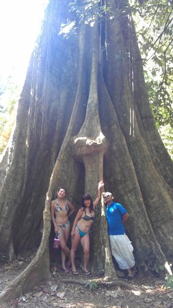 Phuket Sail Tours:                   inside the 1000 year old tree with our guide Sup