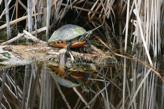 West-End Paradise:                   Schildkröte im Garten - Sicht von unser Terrasse