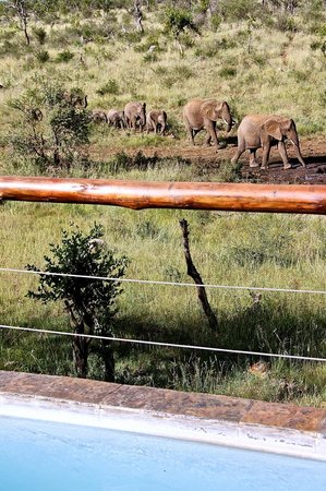 Royal Madikwe Luxury Safari Lodge:                                     40 Elephants coming to the water whole infront of our suite