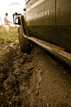 Royal Madikwe Luxury Safari Lodge:                                     Getting stuck in the mud