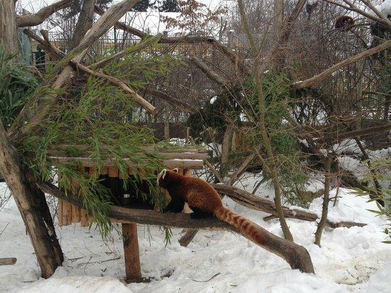 Kolpinghaus Wien-Zentral:                   Очаровательные зверюшки из зоопарка