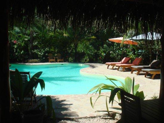 El Pequeno Gecko Verde:                   Pool Area
