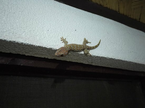 Discovery Island Resort and Dive Center:                   Room gecko