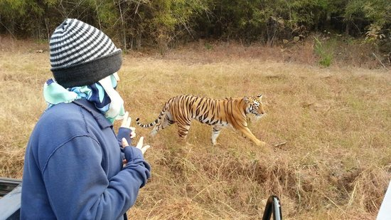 Tiger Trails: posing with his Majesty