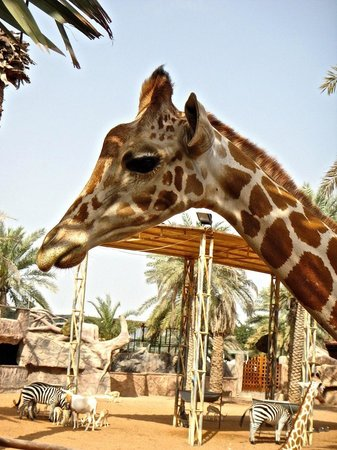 Emirates Park Resort:                   You Can Feed Em!                 