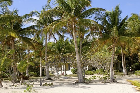 Kamalame Cay:                                                       our digs