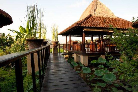 Wapa di Ume Resort and Spa:                   Ristorante sulle risaie