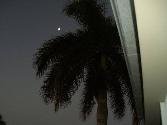 Azul Beach Resort Sensatori Jamaica by Karisma:                   morning view of moon and palm tree as seen from our room