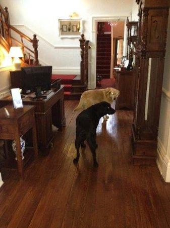 Sawrey House Hotel: friendly residents