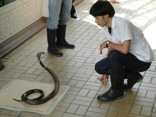 Snake Farm (Queen Saovabha Memorial Institute): Snake demonstration