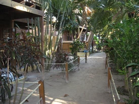 Bananarama Beach and Dive Resort :                   accès aux chambres.
