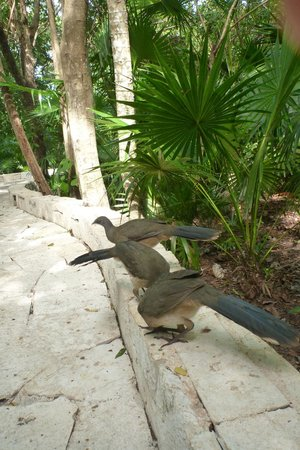 Catalonia Royal Tulum: Birds along the path