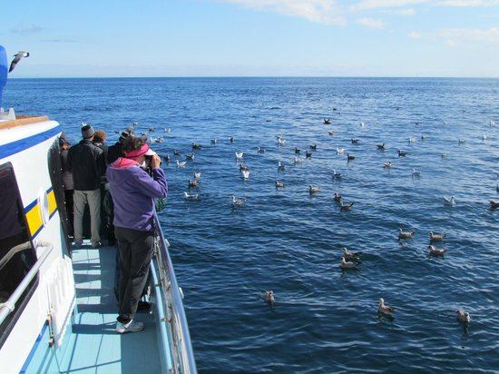 Westport Seabirds Pelagic Tours:                   Birds right at the boat