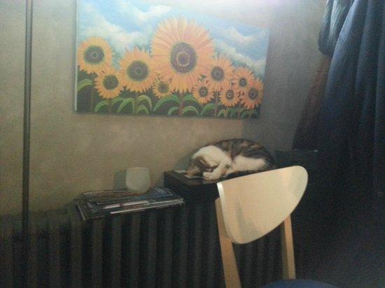 بيرادايز:                   Die Hauskatze                 